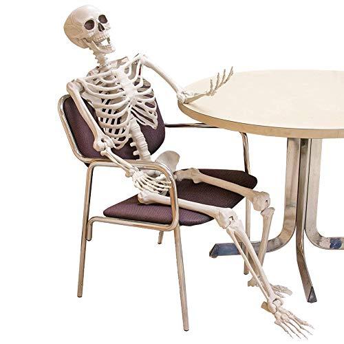 Esqueleto de Halloween Posable, 90 cm/40 cm de cuerpo completo esqueleto de Halloween con articulaciones movibles/posibles para accesorios de casa encantada decoraciones de Halloween