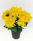 Chrysantheme 32cm gelb im Topf GA Kunstpflanzen künstliche Pflanzen Blumen Kunstblumen