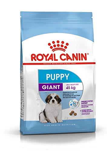 Royal Canin 31 Comida Gigante para Perros, 3,5 kg ⭐