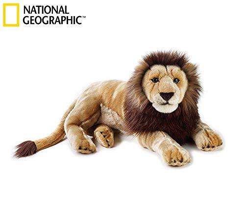 National Géographic - 770750 - Lion
