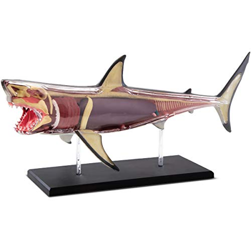 Discovery Mindblown 4D Great White Shark Anatomy Kit Interactive Marine Biology Model Learn Science Fun and Educational STEM Toy for Kids Ages 6 and Up