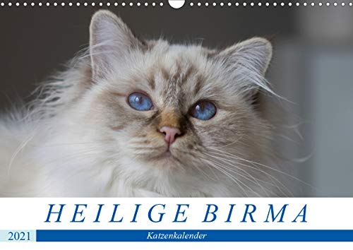 Heilige Birma Katzenkalender (Wandkalender 2021 DIN A3 quer)