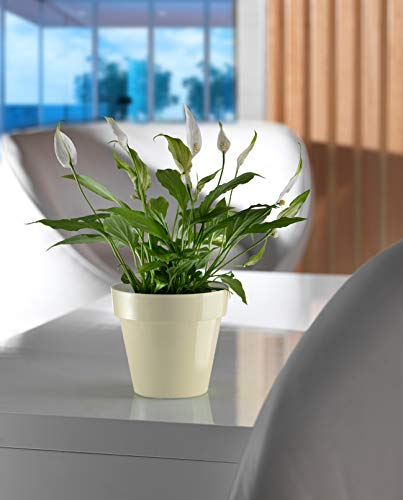 Artplast Pot de fleurs 18 x 16,3 cm Blanc