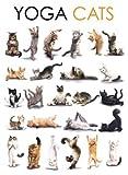 Yoga Cats Katzen Blechschild Gewölbt Neu 30x40cm S3455