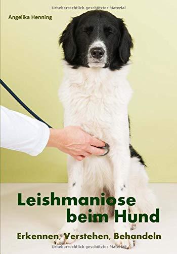 Leishmaniose beim Hund: Erkennen, Verstehen, Behandeln