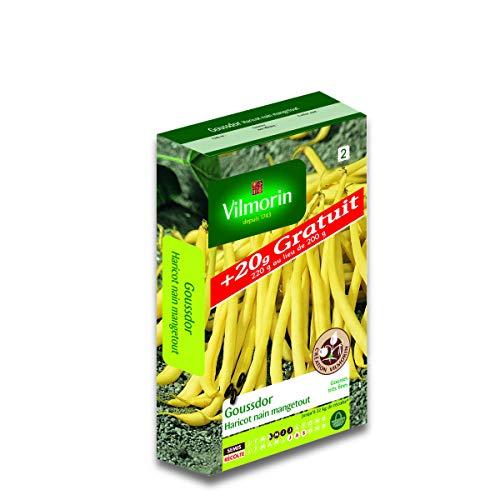Vilmorin - Graines de Haricot nain beurre GOUSSDOR +20g gratuit