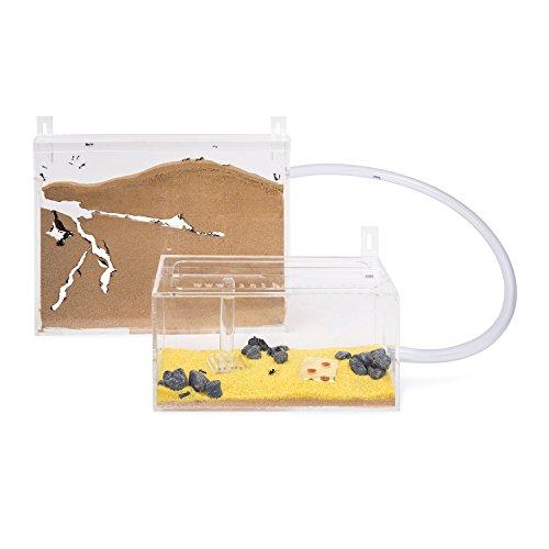 AntHouse - Natürliche Ameisenfarm aus Sand - Big Acryl Wandset(Gratis Ameisen)