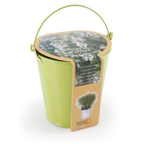 Radis et Capucine Graines de Thym en Pot de Culture Zinc Multicolore 5 x 5 x 5 cm