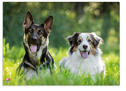 Veloflex 4650090 - Bureau-onderlegger poster hond, 35x50 cm, antislip