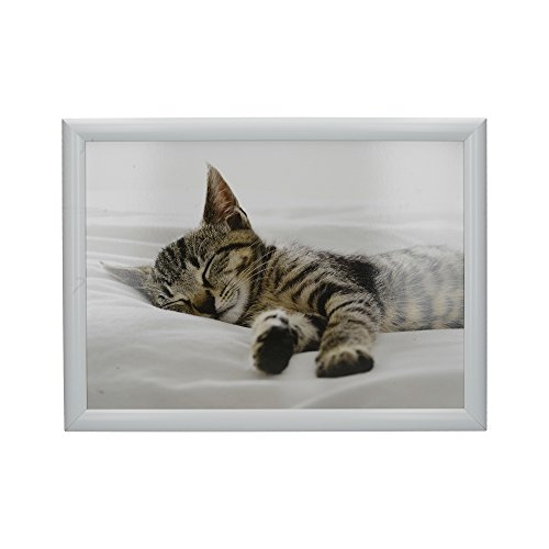 Creative Tops 'Kitten' Cushioned Bean Bag Lap Tray, 44 x 34 cm (17.5' x 13.5') - Multi-Colour