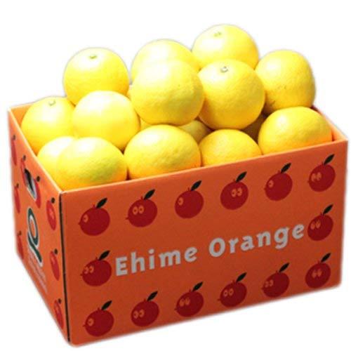 「お試し小夏3×2」お試し品愛媛ニューサマーオレンジ(小夏)6kg(3kg×2箱) フルーツ 果物 通販