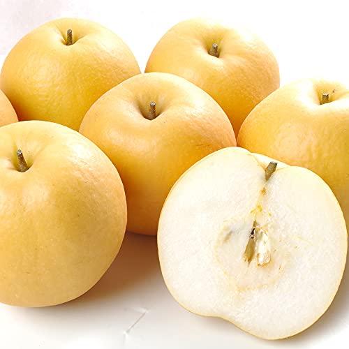 梨 名産地の新興梨(10kg) ご家庭用 しんこう 産地指定不可(新潟・京都・福岡・鳥取など) なし 和梨 果物 フルーツ 国華園