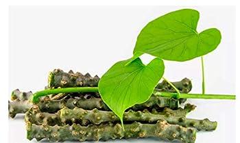 Best giloy plant Reviews