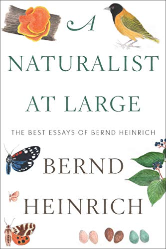 A Naturalist at Large: The Best Essays of Bernd Heinrich (English Edition)