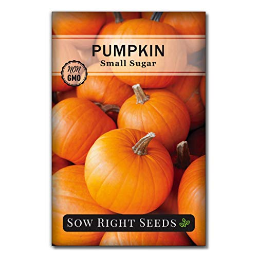 Sow Right Seeds - Small Sugar Pumpkin Seed for Planting - Non-GMO Heirloom...
