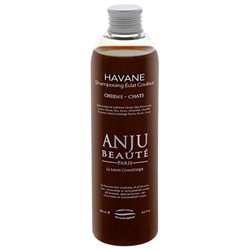 Anju Beautè HAVANE Shampoo per manti red ciocolat tortie e marrone Per Pelo di cani e gatti 250 ml …