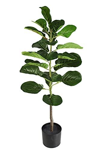 Arnusa Plantas