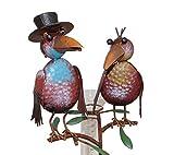 Amicaso Pluviómetro de 2 cuervos con cilindro, estación meteorológica,...