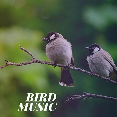 Calming Bird Sounds