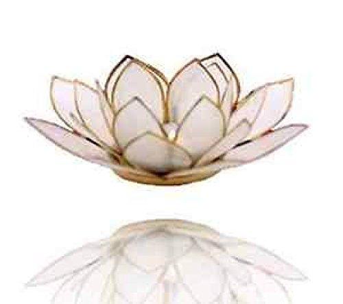 Panotophia Chakra Lotus Licht, Capiz Teelicht Natur