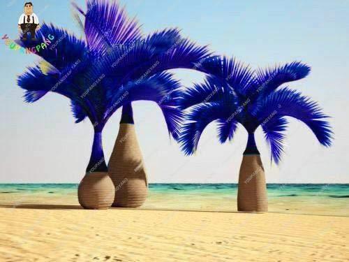 PLAT FIRM GRAINES DE GERMINATION: 5: 30 Pcs Bouteille Bleue Graines De Palmier Plantes Exotiques Arbre Balcon Bonsaï Maison Plan De Jardin