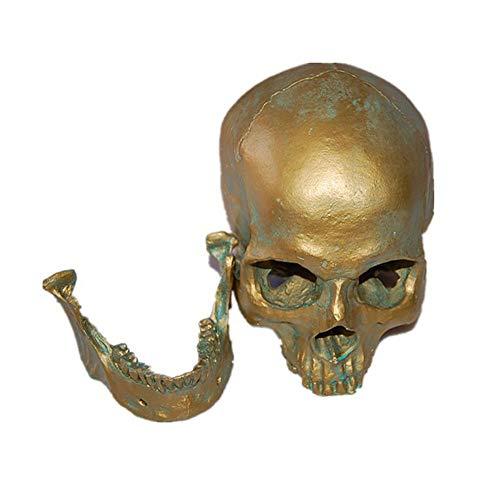 VOANZO Réplica de calavera humana extraíble de resina anatómica modelo médico realista 1:1