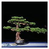 HAKLAKY Bonsai Artificial Decoración 20 Pulgadas Simulación Potted Plant Decorative Bonsai, Bonsai Artificial Bonsai Boicing Pine Tree, Tienda y la Oficina Hogar Oficina Decoración