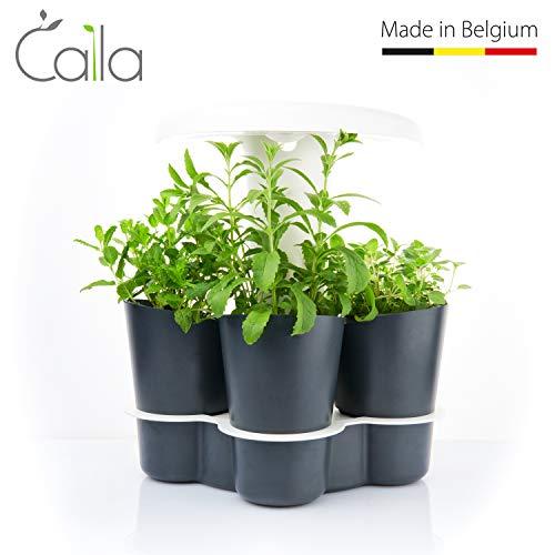 Calla Garden Calla-Edition Limitée Potager d'intérieur Intelligent, Gris Anthracite/Blanc