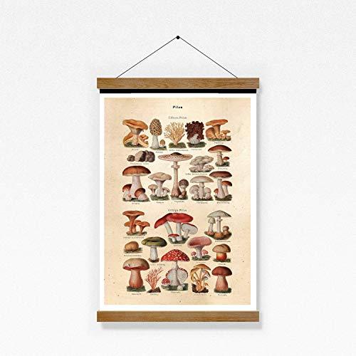 Poster Bild Pilze Vintage A3 ohne Rahmen
