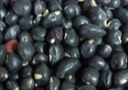 80-100 Graines de VUD034 Noir Crowder