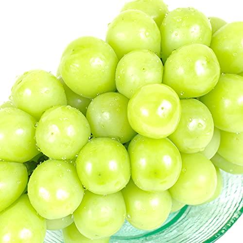 ぶどう 長野産 シャインマスカット 2房 (約350g×2房) ご家庭用 産地直送 葡萄 ブドウ フルーツ くだもの 食品 国華園