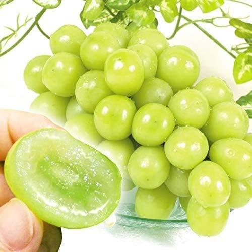 国華園 ぶどう 山形産 シャインマスカット 2房 ご家庭用 葡萄 ブドウ フルーツ くだもの 食品