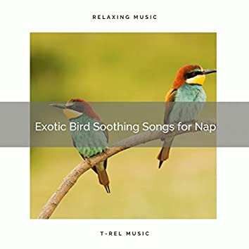 2021 New: Exotic Bird Soothing Songs for Nap