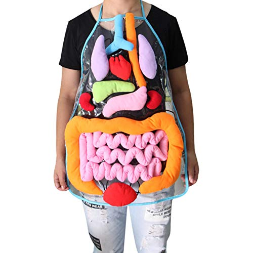Younar 3D Organ Apron, Anatomy Apron Human Body Organs Awareness Educational Toy for Home Preschool Teaching Tool (Shipping from The U.S.)
