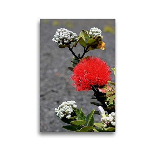 CALVENDO Premium Textil-Leinwand 30 x 45 cm Hoch-Format Endemische Blume im Lavafeld - Big Island, Leinwanddruck von Florian Krauss