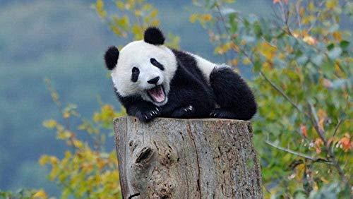 Diy Malen Nach Zahlen Kit Ölgemälde Set Tierpanda Auf Baumstumpf 40X50Cm Leinwand Ölgemälde Set Erwachsene Anfänger Mit Pinsel Und Acrylpigment Für Kinder Erwachsene Home Dekorieren