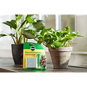 Miracle-Gro Indoor Plant Food Spikes, Includes 24 Spikes - Continuous Feeding for all Flowering and Foliage Houseplants - NPK 6-12-6