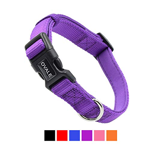 Olahibi Soft and Comfortable Neoprene Padded Nylon Basic Dog Collar Solid Color pattern for Walking Training Dogs (S, Purple Collar)