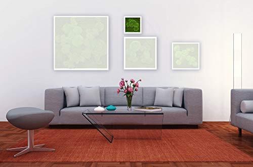 Moosbild Pflanzenbild mit Falchmoos und Kugelmoos versch. Maße günstig (Weiß, 25x25 cm)