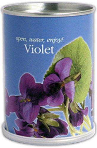 Mac Flower's Violettes à Faire Pousser en Boite