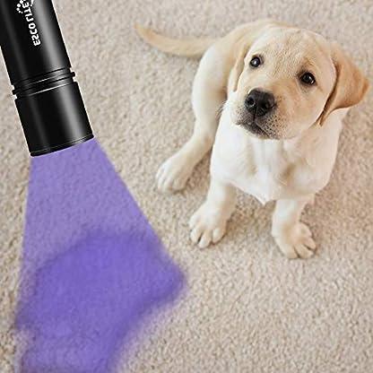Escolite UV Flashlight Black Light Flashlight, 2pcack 12 LED 395 nM Ultraviolet Blacklight Flashlight Detector for Dog Urine, Pet Stains, Matching with Pet Odor Eliminator(Betteries not Include) 6