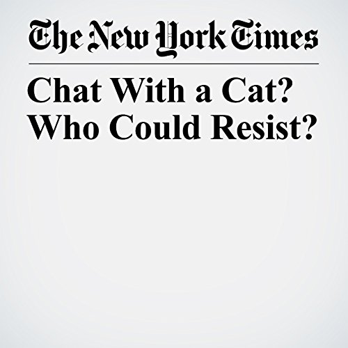 Chat With a Cat? Who Could Resist? copertina