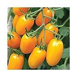David's Garden Seeds Tomato Grape Nova 9898 (Orange) 25 Non-GMO, Hybrid Seeds
