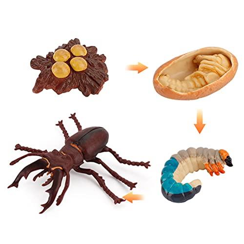 CZYHP Tierlebenszyklusmodell Kinder Frühe Bildung Kognitive Spielzeugsimulation Kreative Karikatur Tierwachstumszyklusmodell Home Ornament,Hirschwurm