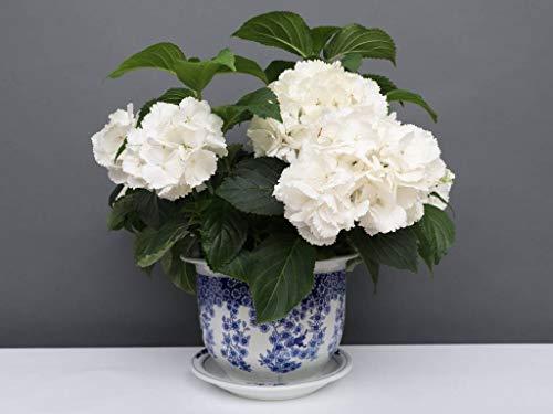 Yajutang China Porzellan Blumentopf Blau-Weiß mit Schmetterling Ø 40cm …