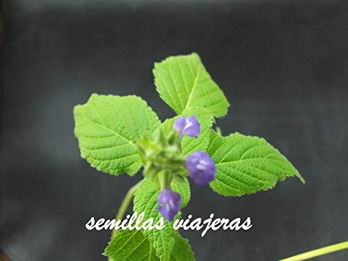 ScoutSeed Chia, Salvia hispanica, 500 semillas, graines, samen, semillas, sementes, semi