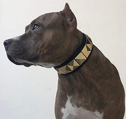 Hundehalsband, Leder, goldfarben, Pyramiden-Nieten, gepolstert, Schwarz, für große Hunde, Bully Boxer, Cane Corso (Halsgröße 45,7 cm bis 50,8 cm)
