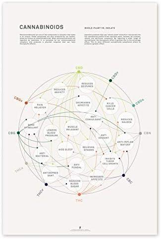 Cannabinoid Health Matrix Print Cannabis Therapeutic Benefits Infographic Chart Medical Marijuana product image