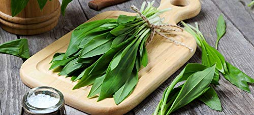 Bärlauch/ca.50 Samen/Ramsen/Gesundes Nahrungsmittel