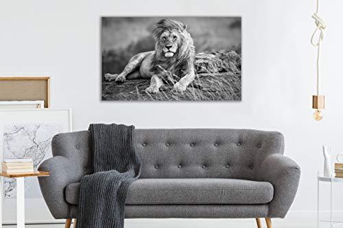 Oedim Cuadro en Metacrilato León Blanco y Negro | 50 x 44 cm | Cuadro para Pared Ligero, Resistente y Económico